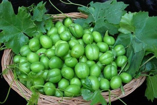 خواص گوجه سبز؛ از کاهش وزن تا درمان افسردگی
