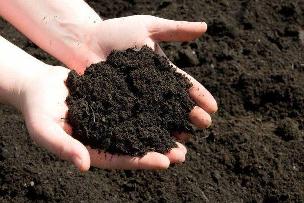 سهم کودهای زیستی در سبد کشاورزی بیشتر می گردد